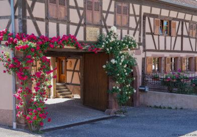 Balade à Mittelhausen en passant par Hohatzenheim – Bas-Rhin